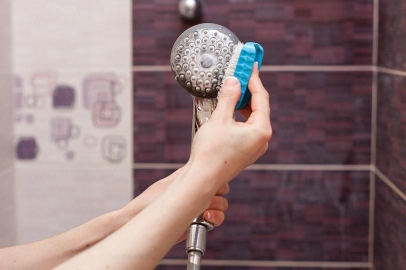 cleaning an calcified shower head_brizmaker_shutterstock