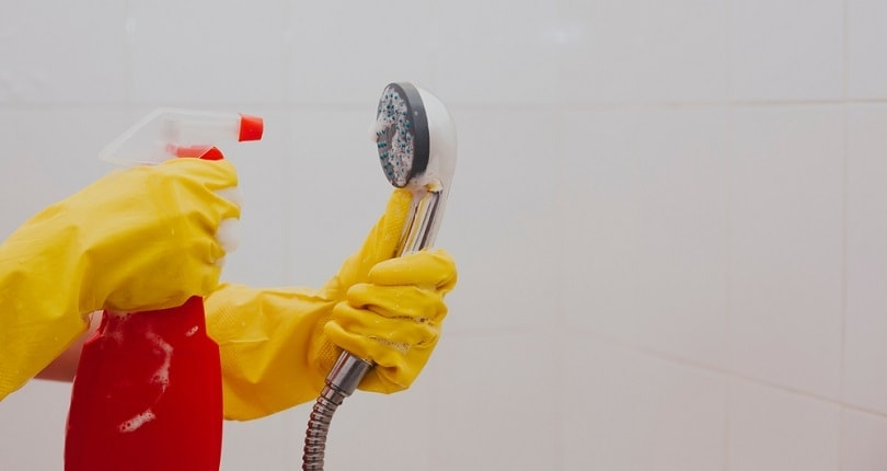 rubber gloves cleaning the shower head_G Tbov_shutterstock